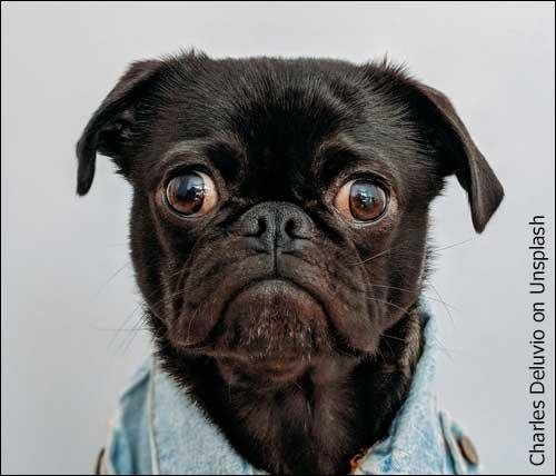 Bug Eyed Doggie